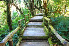 Walk way. In the deep forest Stock Image