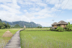 Walk way across rice field in Laos Royalty Free Stock Photography