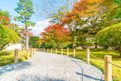 walk way in autumn park Royalty Free Stock Image