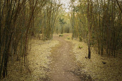 Walk way between bamboo tree in forest Royalty Free Stock Photos