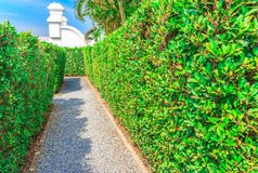 The walk way. Of bushes and green trees.n Stock Photography