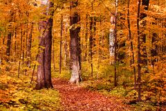 Walk Way Through Colorful Trees Stock Photos
