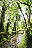 The walk way in the deep forest Stock Photography