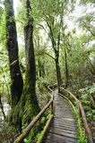 The walk way in the deep forest Stock Photos