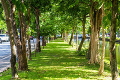Walk way. In dense trees and plant Royalty Free Stock Photo