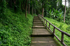 Walk way in the forest Royalty Free Stock Photos