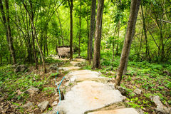 Walk way in the forest. Stock Photo