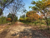 The walk way in forest. The walk way and orange leaves in forest. It is a beautiful view Stock Photo