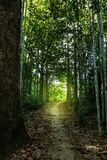 Walk way in forest. Walk way among green forest with light at the end Stock Images