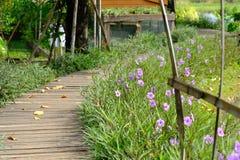 Walk way in the garden with purple flower. Wood Walk way in the garden with purple flower stock image