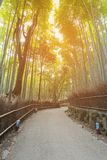 Walk way leading to Bamboo forest in Kyoto Japan Royalty Free Stock Image