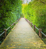 A walk way among a mangrove forest Stock Photo