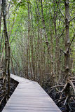 Walk way in mangrove forest, other name is inter tidal forest.  Stock Image