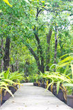 Walk way in mangrove forests. Stock Photos