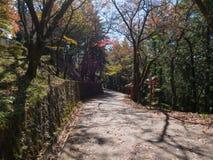 Walk way near Arakura Sengen Shrine. Kawaguchi, Japan - November 1, 2018: Walk way near Arakura Sengen Shrine in Fujiyoshida, Yamanashi Prefecture near to royalty free stock image