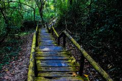 Walk way. Old walkway of forest Royalty Free Stock Image