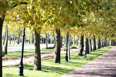 Walk way in the park.  Stock Image