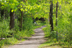 Walk way in the park Royalty Free Stock Images