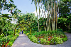 Walk way Path through the Garden Royalty Free Stock Photos
