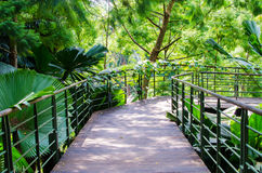 Walk way Path through the Garden Royalty Free Stock Photo
