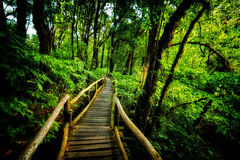Walk way into rain forest inthanon mountain Thailand Royalty Free Stock Photography