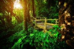 Walk way into rain forest inthanon mountain Thailand Stock Photo