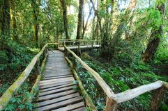The walk way in the rainforest Stock Image