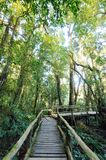 The walk way in the rainforest Royalty Free Stock Images