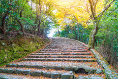 Walk Way with Red maple leaves blooming at Arashiyama Royalty Free Stock Image