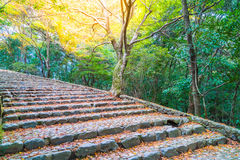 Walk Way with Red maple leaves blooming at Arashiyama Royalty Free Stock Photography