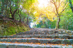 Walk Way with Red maple leaves blooming at Arashiyama Royalty Free Stock Photos