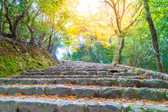Walk Way with Red maple leaves blooming at Arashiyama Stock Photos