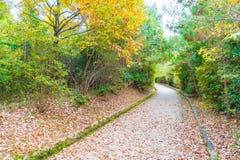Walk Way with Red maple leaves blooming at Arashiyama. Kyoto, Japan Royalty Free Stock Photography