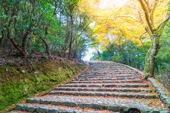 Walk Way with Red maple leaves blooming at Arashiyama. Kyoto, Japan Stock Photography