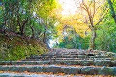 Walk Way with Red maple leaves blooming at Arashiyama. Kyoto, Japan Royalty Free Stock Photo