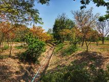 The walk way and roof. The walk way and roof and orange leaves in forest. It is a beautiful view Royalty Free Stock Images