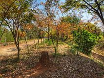 The walk way and roof. The walk way and roof and orange leaves in forest. It is a beautiful view Royalty Free Stock Photo