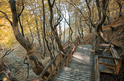 Autumn walkway. Walk way to the beach and the white chalk cliffs of Moen by the Baltic Sea - Denmark Stock Photo