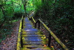 Walk way. To nature forest Stock Photo