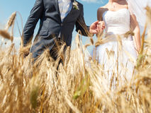 Walk in Wheat Royalty Free Stock Images