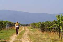 Walk in wineyards Royalty Free Stock Images