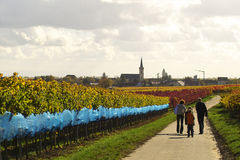 Walk in wineyards. A family with children having a walk in wineyrds, Germany Royalty Free Stock Photos