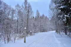 Walk winter birch forest road ski track. Each tree decorated with winter dress looks majestically at the open cover in front of it. During a walk stock photos