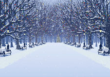 A walk in the winter park. Avenue of trees, street lamps and benches in a snow covered park. Vector illustration Royalty Free Stock Images