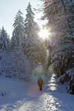 Walk through a Winter wonderland Stock Photo