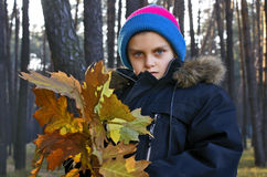 Walk in wood. The boy with a bouquet of oak autumn leaves Stock Photos