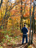 Walk through the Woods. Male walking through a forest in autumn Stock Photos