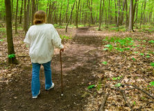 Walk in Woods Stock Photography