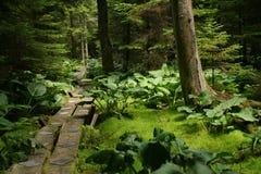 Walk in the woods. Foot bridge Stock Photography