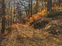 walk in the woods in autumn Stock Photos
